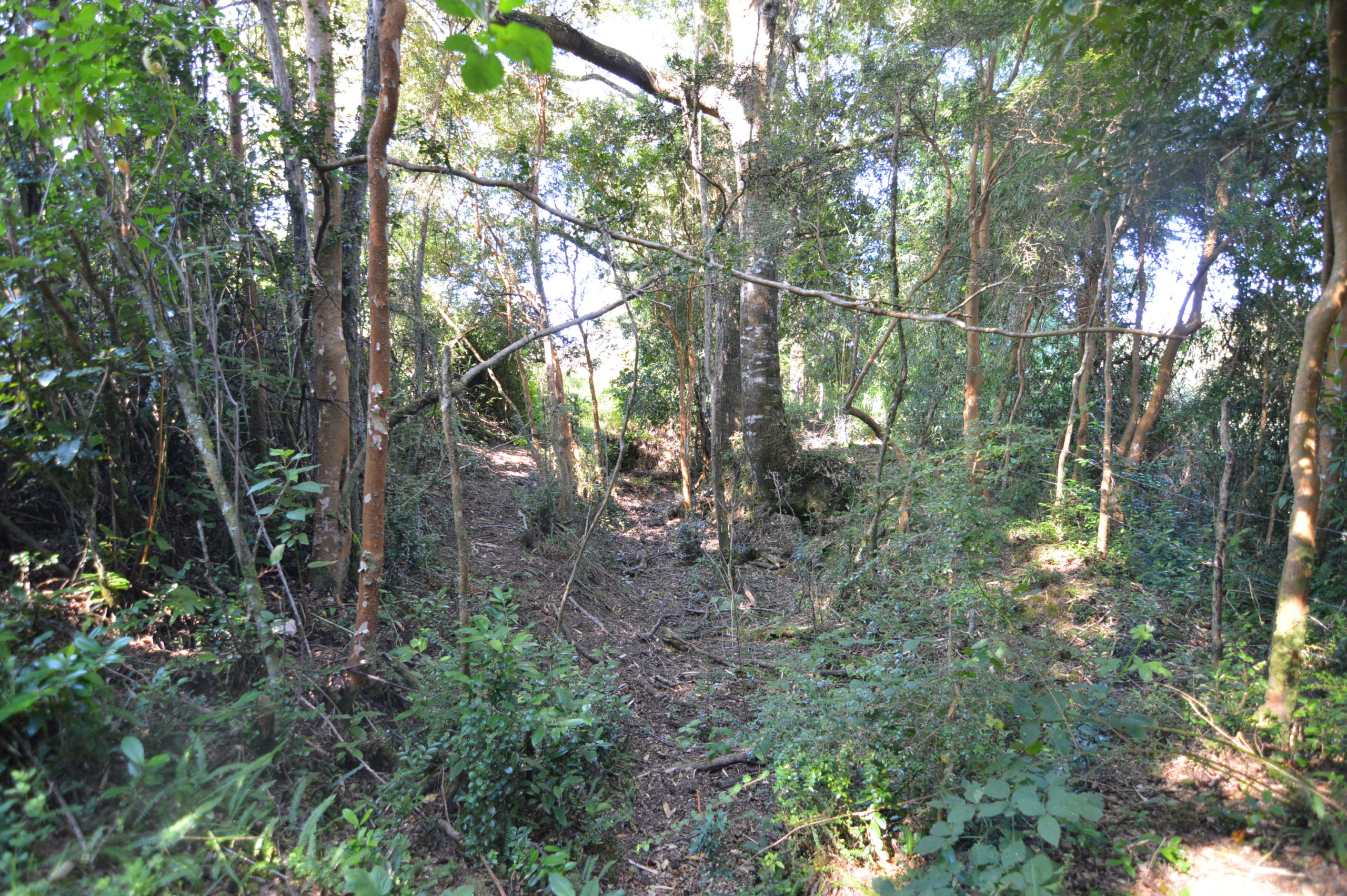 Polincay, Acceso Río