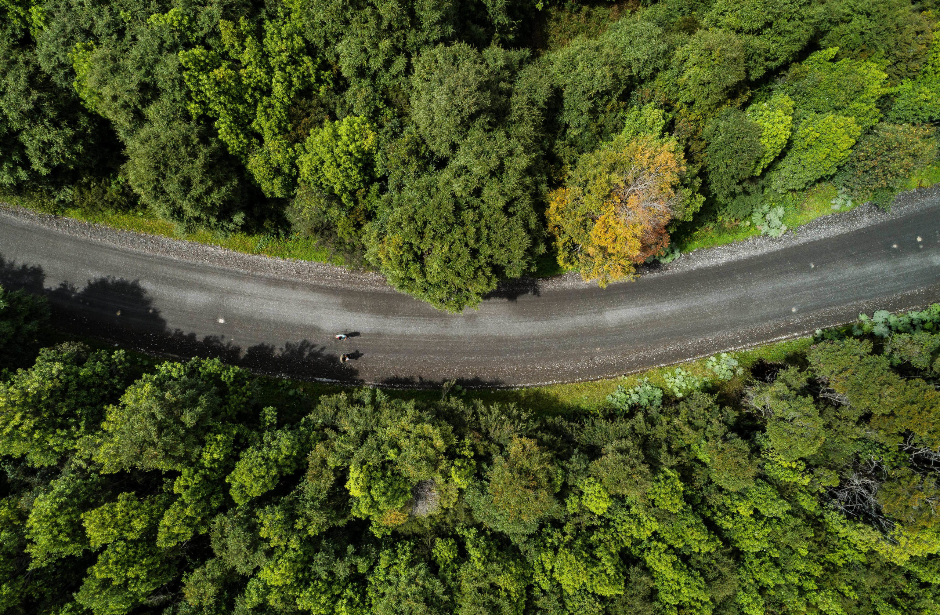 Reserva Chiloé