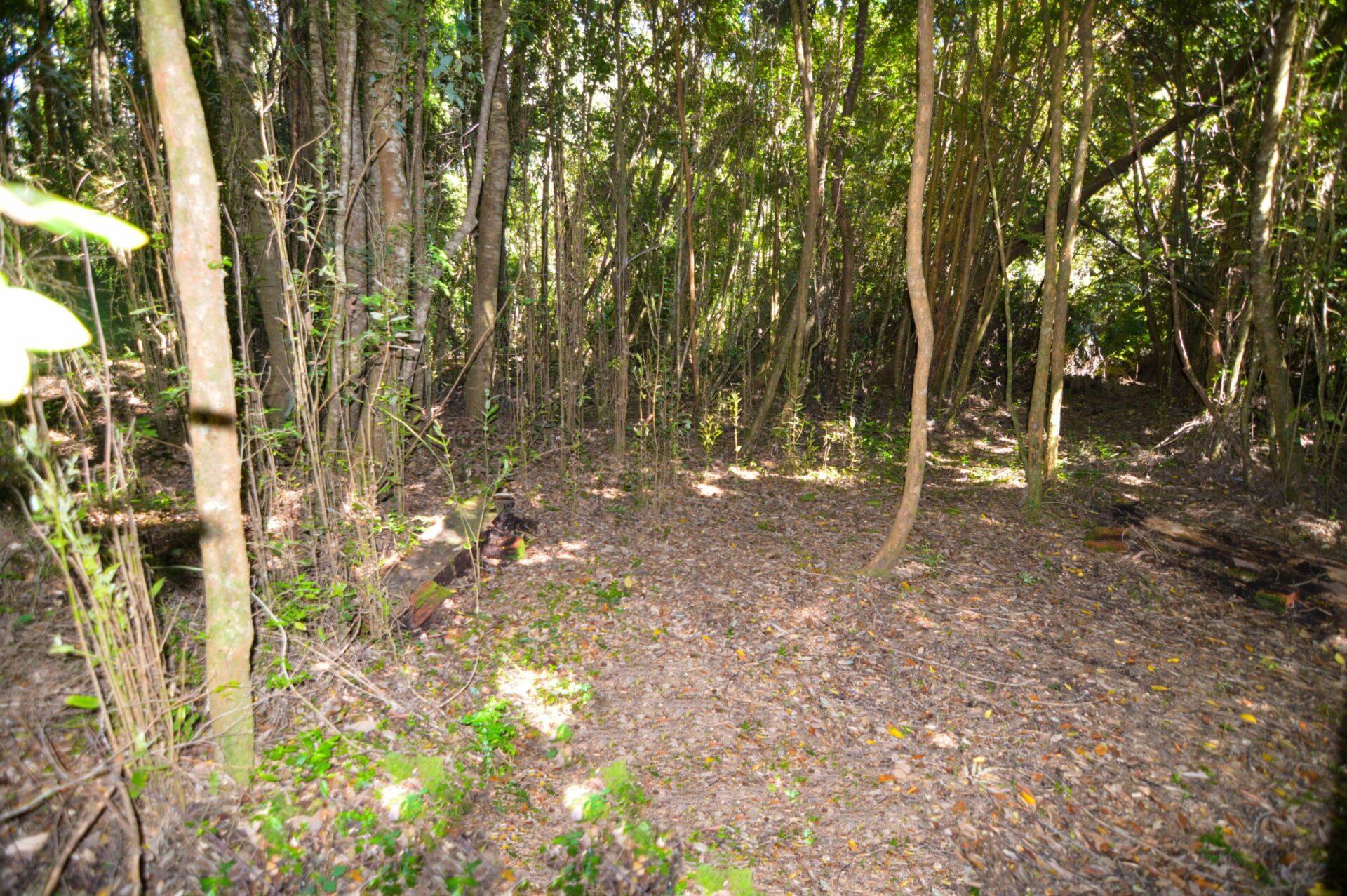 Lomas de Coihuín